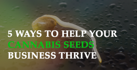 cannabis seeds at wholesale prices 5 ways to help your cannabis seeds business thrive