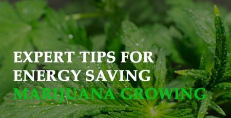 expert tips for energy saving marijuana growing