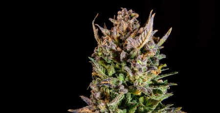 Energy Boosting Cannabis Strains To Prepare For Your Next Hike 1