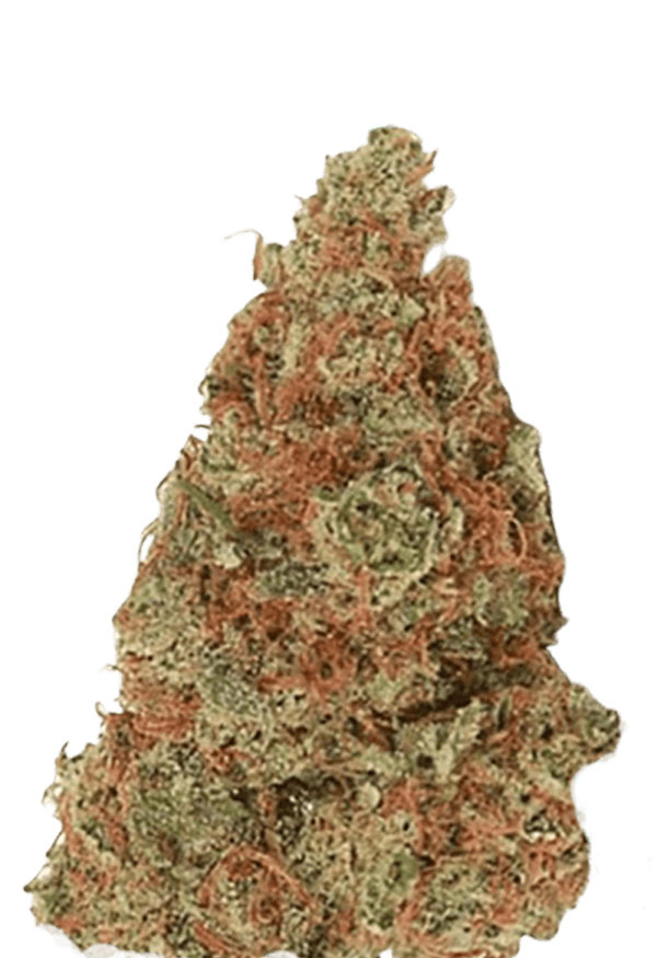 Mochalope Regular Marijuana Seeds