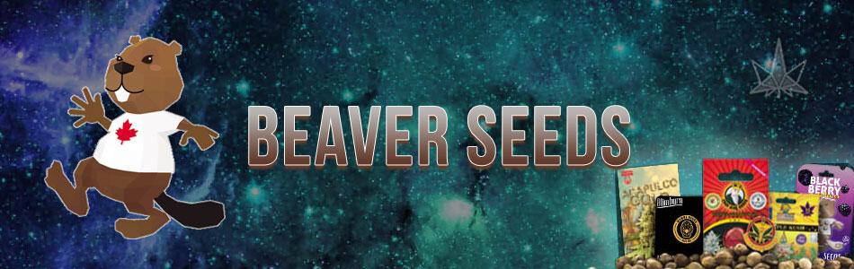 Beaver Seeds