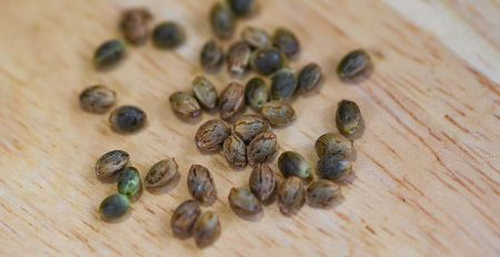 How to Identify Fake Cannabis Seeds