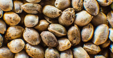 Where to Buy Cannabis Seeds in Canada