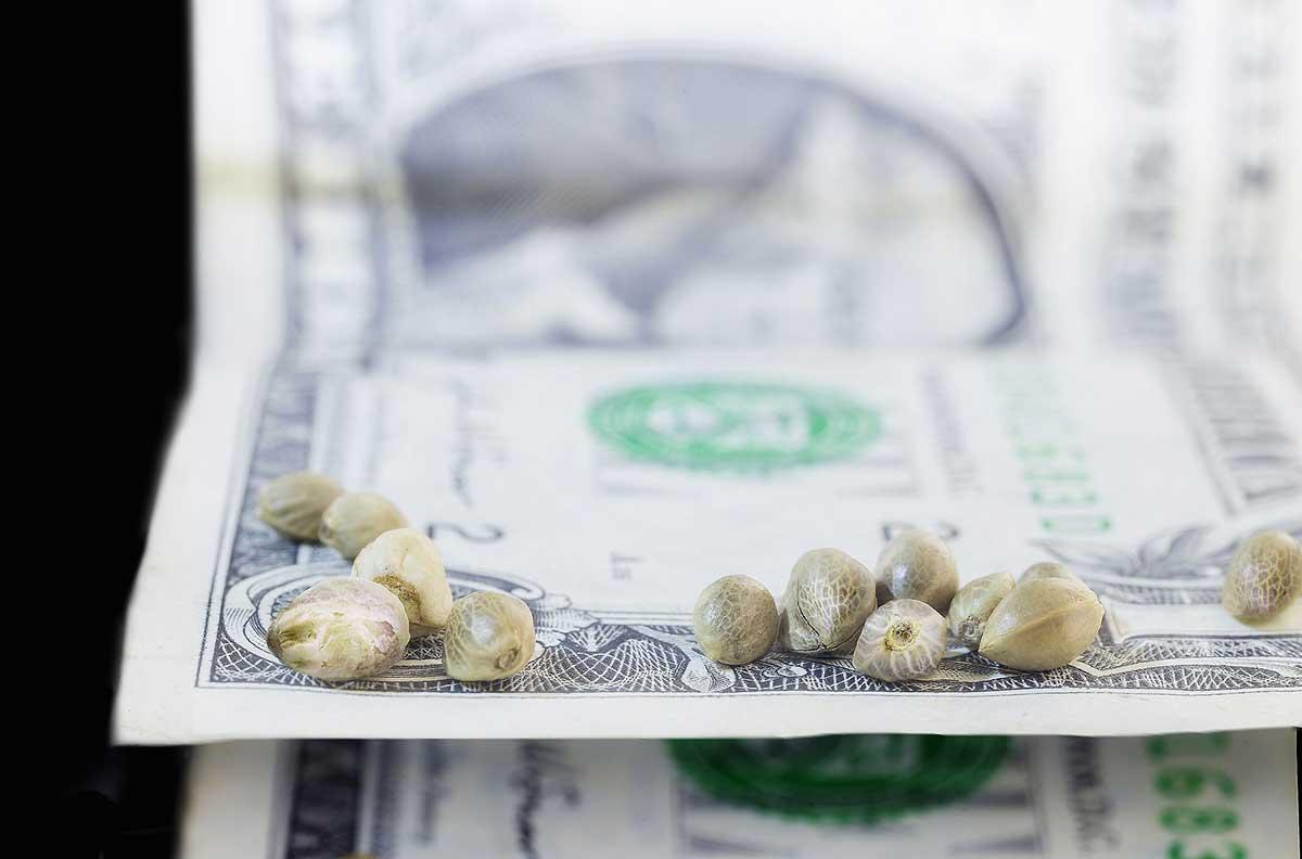 Purchasing Marijuana Seeds