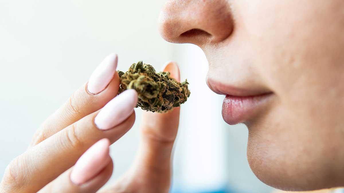 Top 10 Strongest Marijuana Strains